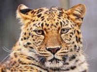 Profile image of Lonesometomcat Again