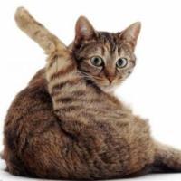 Profile image of Hebble999