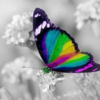 Profile image of Butterfly7644